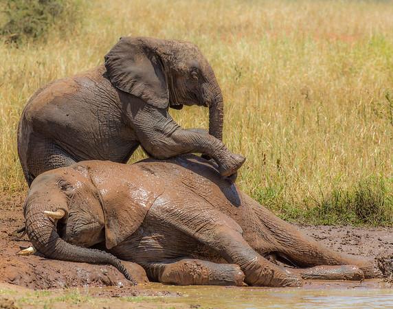 Tanzania Mammals 2015