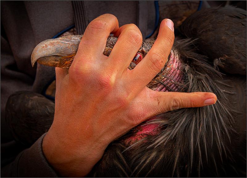 122.Jim Shane.1.The hand of man 1.jpg