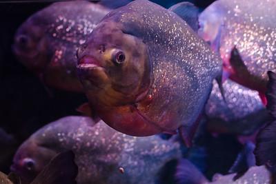 The Aquarium of the Smokies