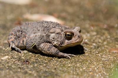 toads 2008