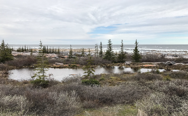 Launch Road taiga pond Hudson Bay Churchill Manitoba Canada IMG_7916.jpg