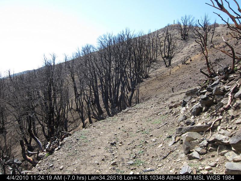 20100404066-Angeles National Forest, Strawberry Peak trail.JPG