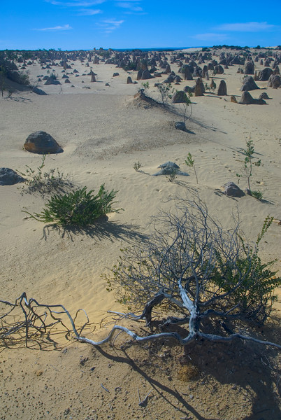 Pinnacle Desert 9 - Western Australia