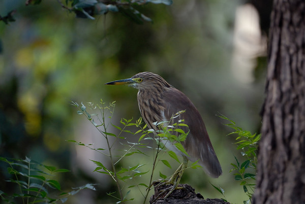 Birding Vedanthangal Dec 7 2008