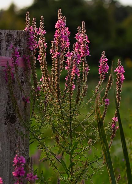 2019_08_Horn Pond community garden_MG_4193_Luminar2018-edit-Edit.jpg