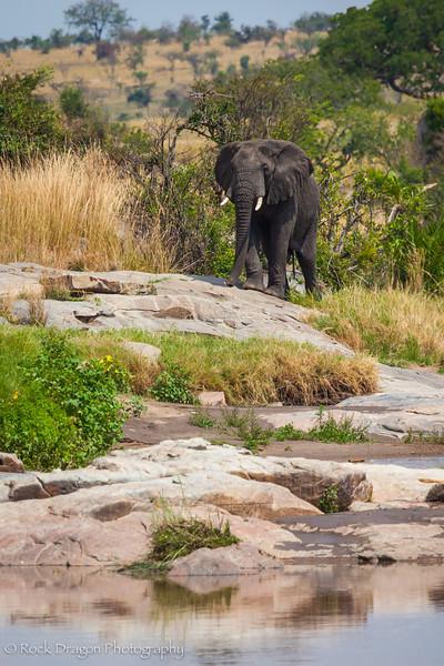 2_North_Serengeti-10.jpg