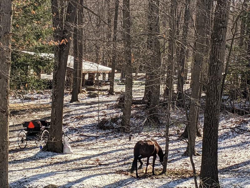 Snowy Day Visit