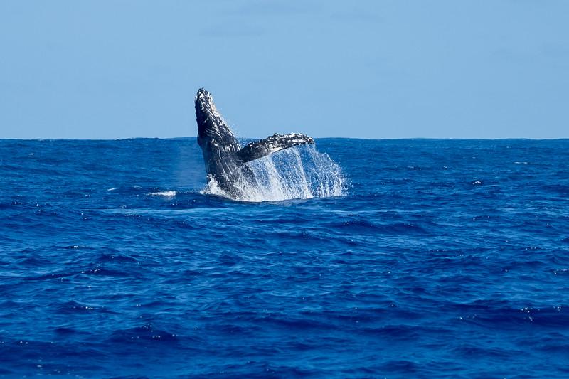 whales-leila-62.jpg