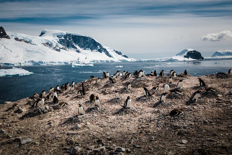 _MG_5292_20170120_Antarctica.jpg