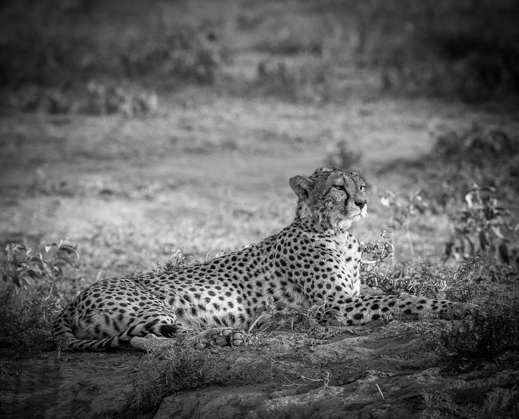 Tanzania_Feb_2018-90.jpg