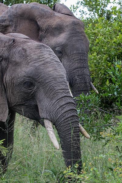 Elephants 1702259602.jpg