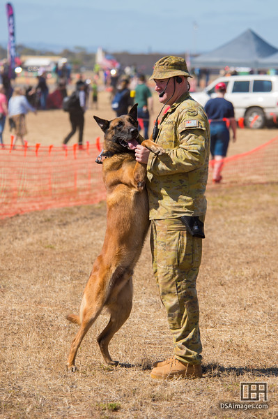 RAAF working dog