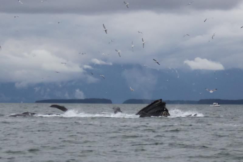 Alaska 2009-219.jpg