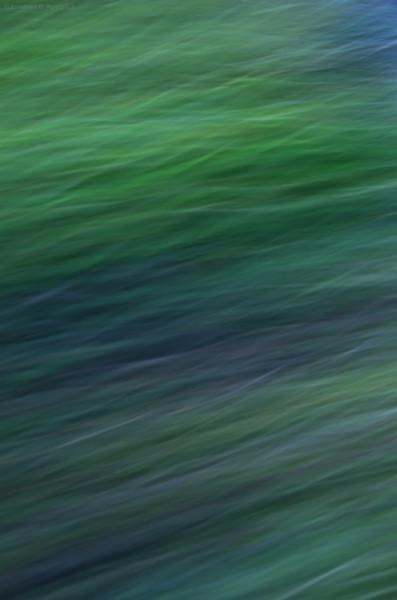 Fast grass