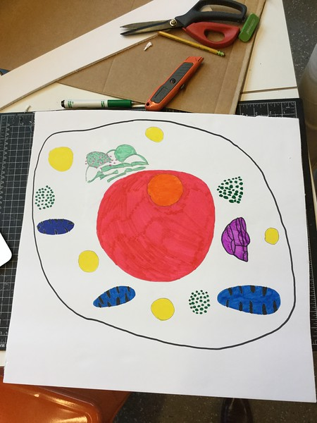 Biology Interactive Cells Project