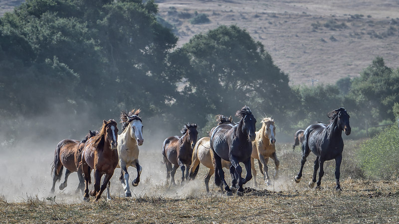 Return to Freedom - Wild Horse Sanctuary, Lompoc CA