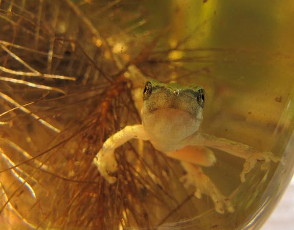 2010 - Birdbath Eggs to Forest Frogs