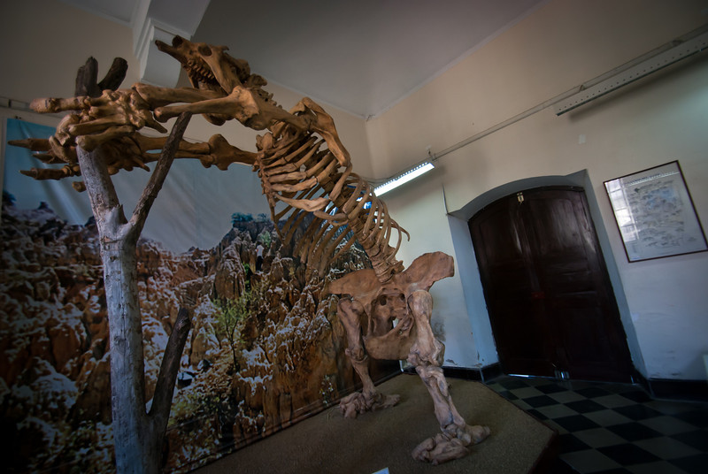 Tarija 201205 Museum Paleontology (1).jpg