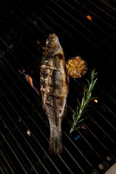 Fish_204.jpg