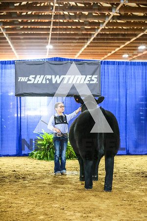 2019 Steer & Market Heifer Ring Shots