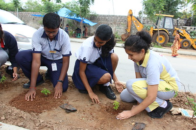 2019-09-04 Plants Sapling  by CHIREC Students@chirecmedians
