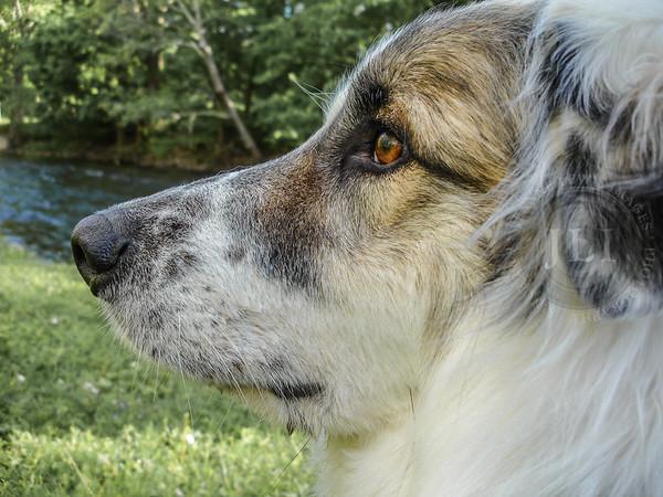 Jake (Adopted: 2004 - September 4, 2019)