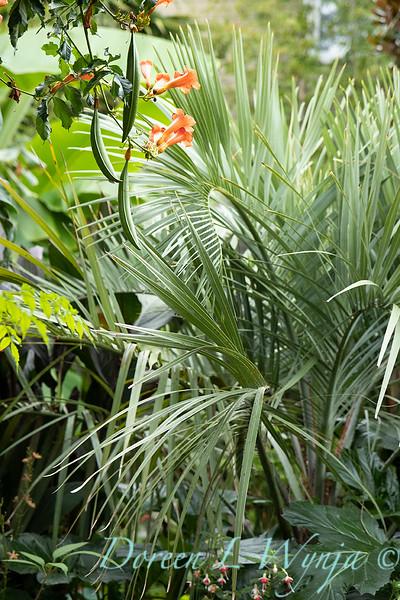 Lisa Bauer - designer's garden_1319.jpg
