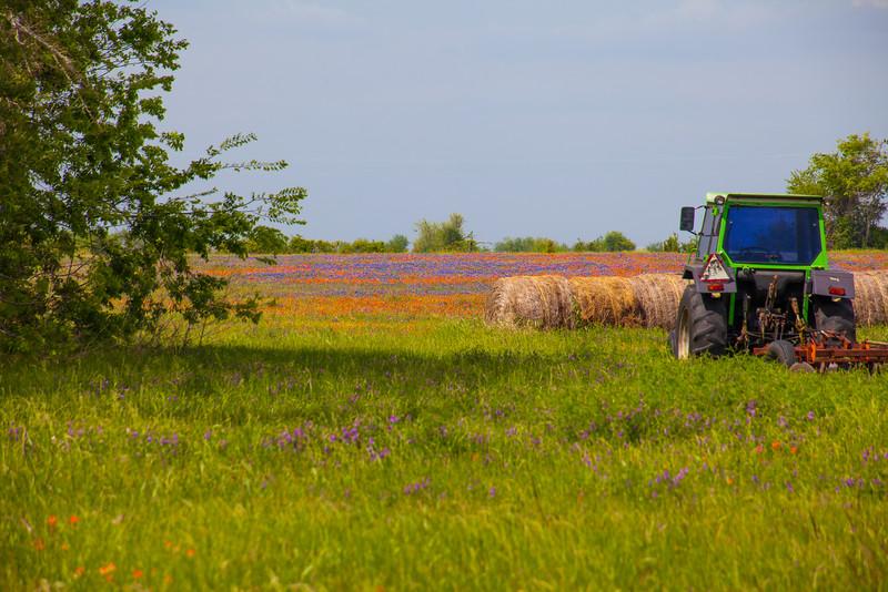 2016_4_9 Texas Wildflower Shoot-8669.jpg