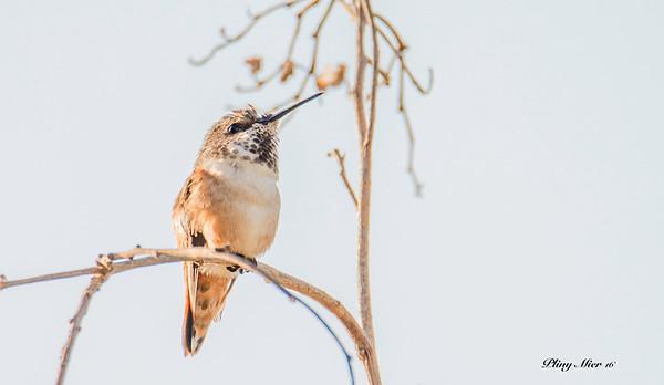 Hummingbird 3_DWL4895.jpg