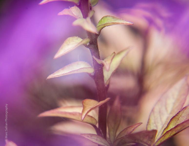 0715_Garden_Macro-95.jpg