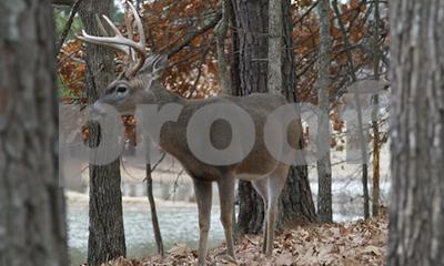 arkansas-deer-harvest-tops-200000-for-fifth-straight-year