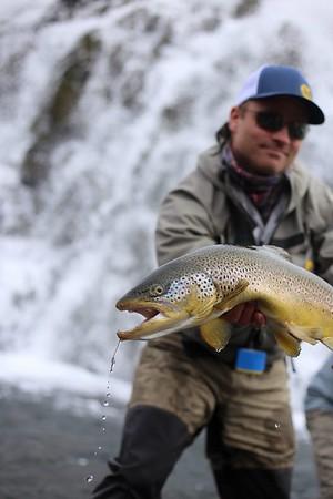 Iceland Fish Partner Photos