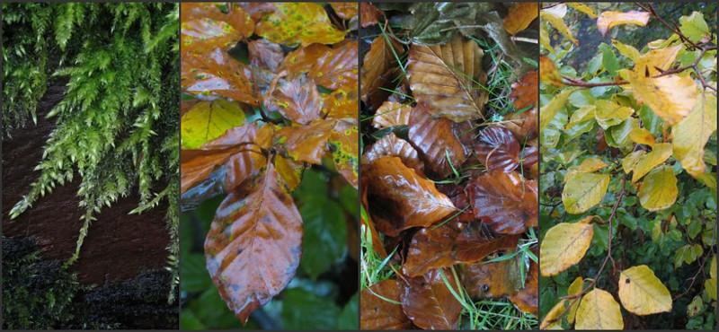 autumn colors 1-387289956-O.jpg
