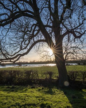 Barnby Dun Tree sunbursts January 2021