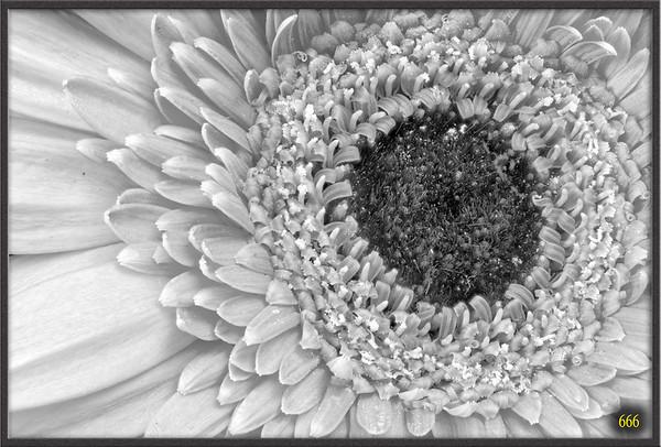 2015-06-07 Bouquet de fleurs de Camille