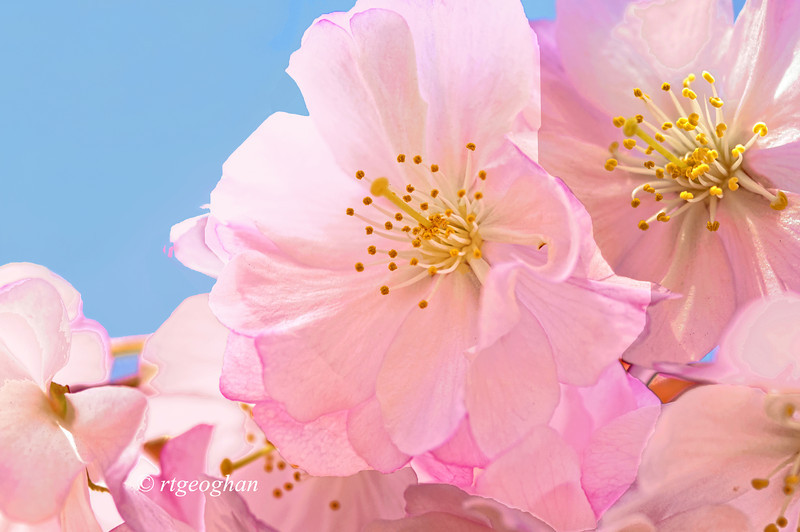 April 16_BranchBrookCherryBlossoms_8191.jpg