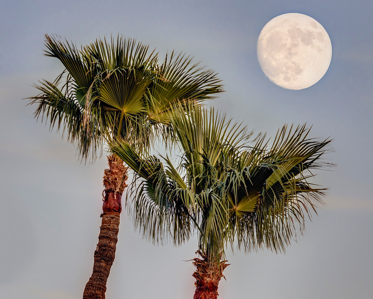 Moon over Palms