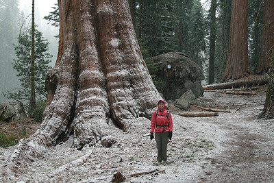 Sequoia/Kings Canyon National Parks