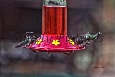 Hummers  (20)