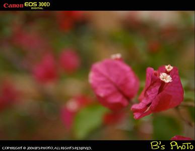 2004 - Hong Kong Flower Show
