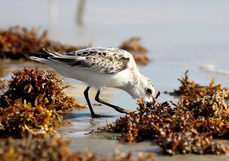 Bird 10-17-15 Port A 053.jpg