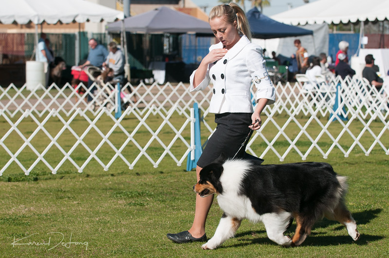 20170205_Australian Shepherds_Lost Dutchman Kennel Club-20.jpg