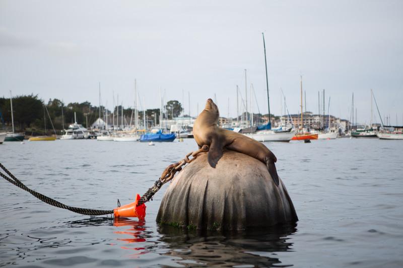 2012-12-04_Scuba_Monterey_Roeder_0094.jpg