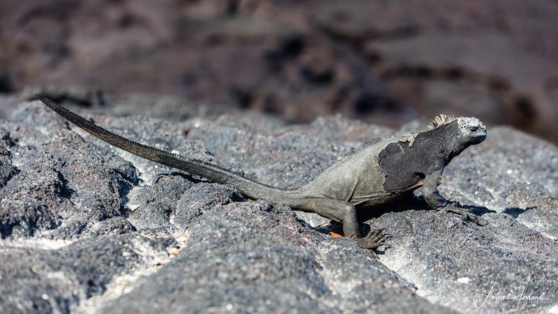2016 Galapagos Islands