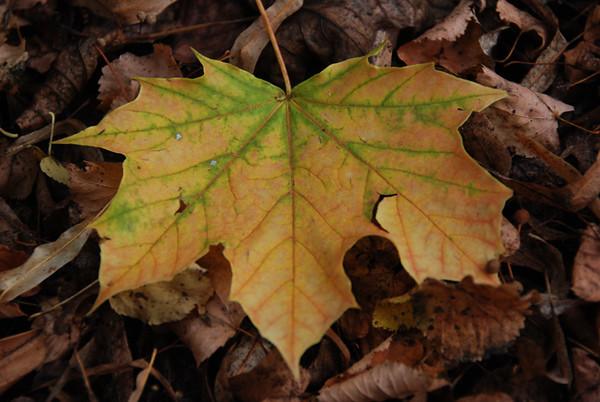 1019 leaf.jpg