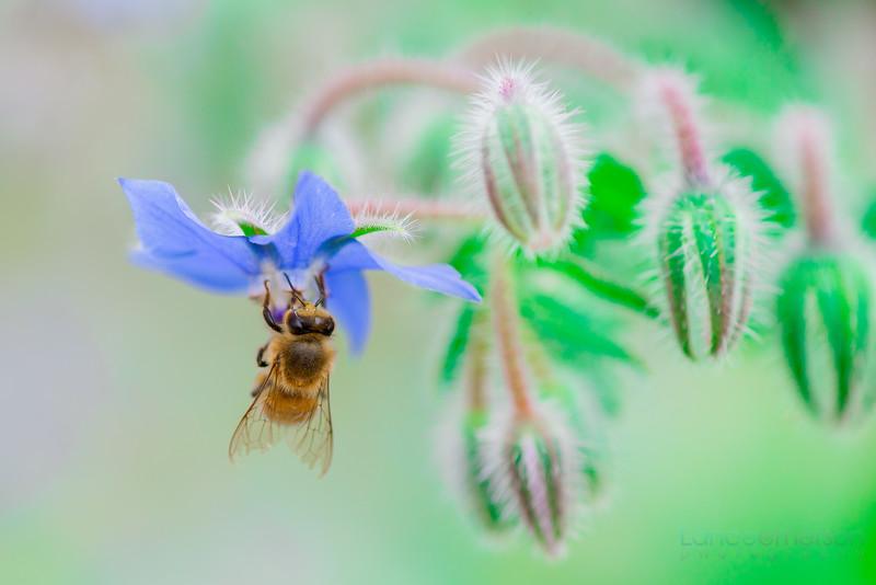 Encinitas Botanical Gardens by Lance Emerson (2 of 4).jpg