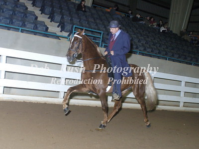 CLASS 19  LITE SHOD FOUR YRS & UNDER SPECIALTY