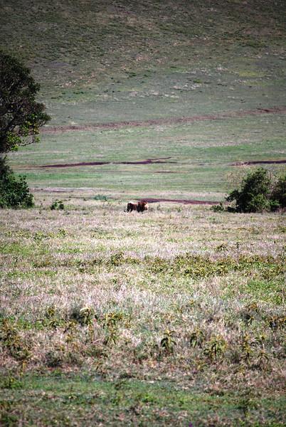 Ngorongoro (93).JPG