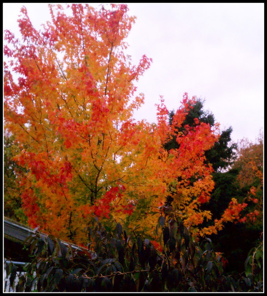fall (12).jpg