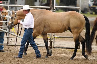 Jenson Horses